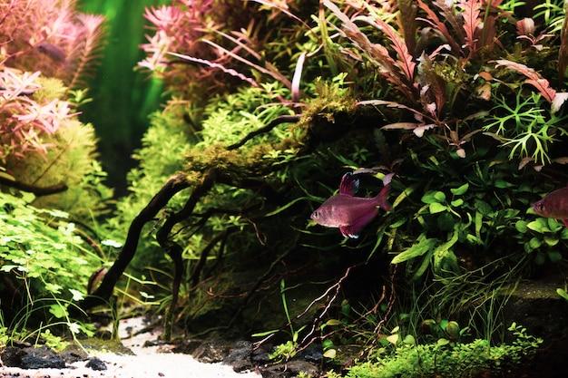 Nature morte de près de beau paysage aquatique tropical