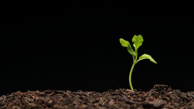 Nature morte de semis en croissance