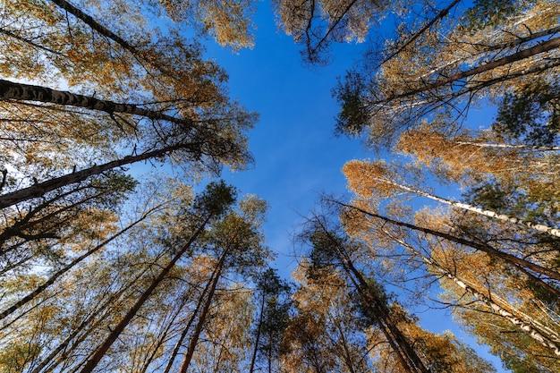 Nature multicolore lumineuse avec des arbres d'automne dans la forêt contre le ciel bleu.
