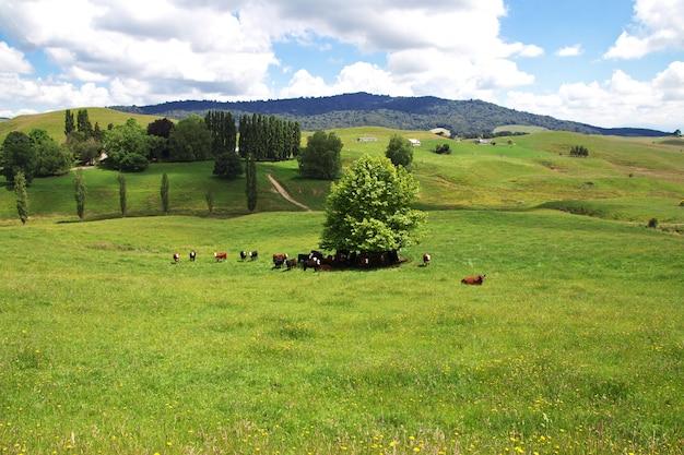 Nature en nouvelle-zélande