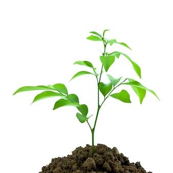 Nature pousse la saleté jeune plant
