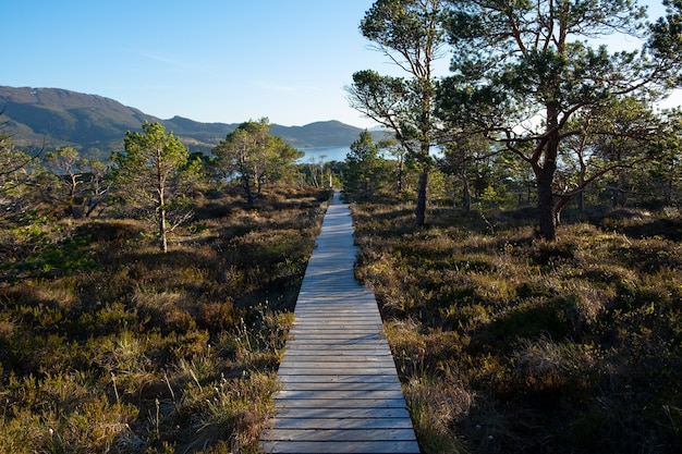 Nature de la scandinavie
