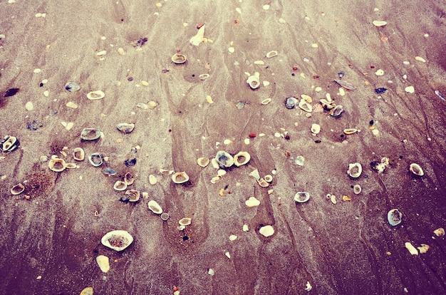 Nature seashell beach sands ocean