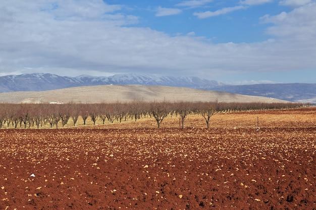 Nature à vallée de la bekaa au liban