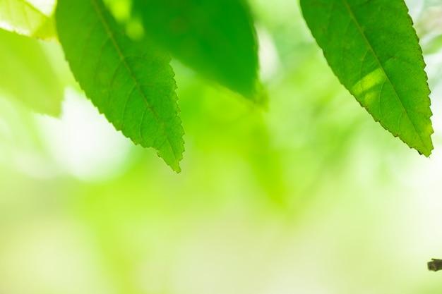 Nature vert feuilles sur fond d'arbre de verdure floue avec la lumière du soleil dans le parc public de jardin