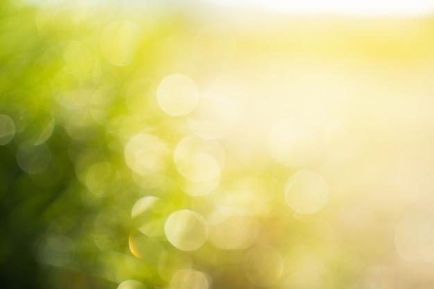 Nature verte abstraite et bokeh du matin