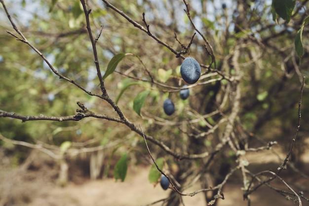Nature verte feuilles pomme fruit campagne