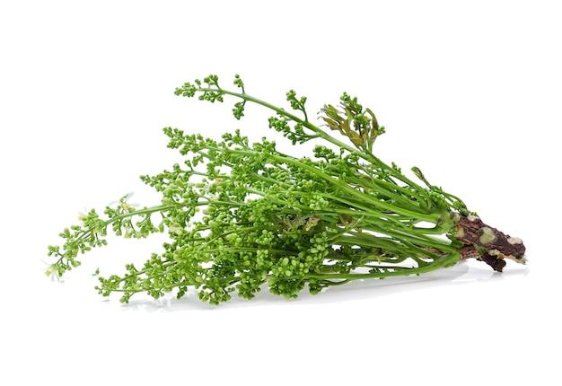 Neem siamois, nim, margosa, quinine (azadirachta indica a. juss. var. siamensis valeton)