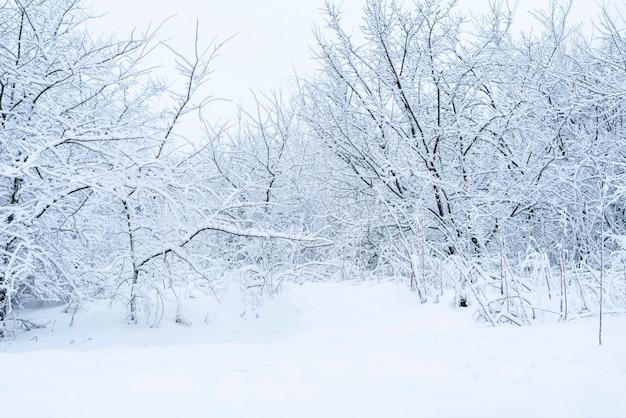 La neige abstraite de la forêt d'hiver par temps glacial. arbres sous la neige
