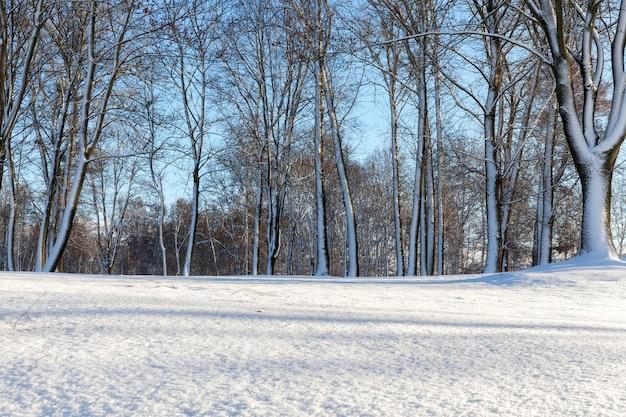 Neige après une chute de neige pendant un gel. gros plan avec une faible profondeur de champ