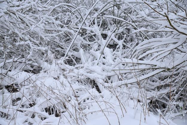 Neige sur les branches après blizzard