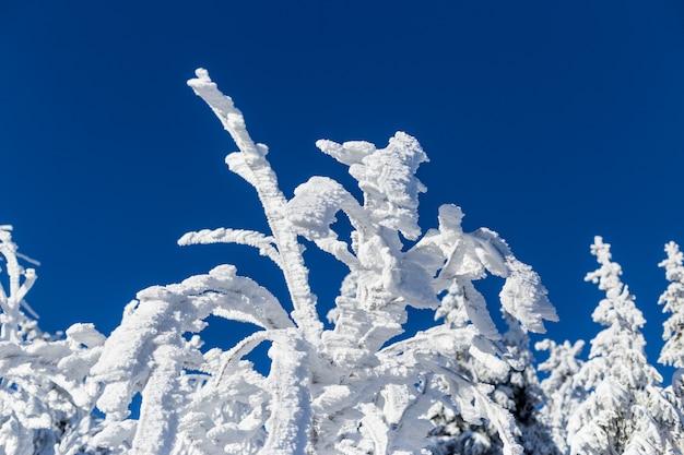 Neige épaisse sur les arbres
