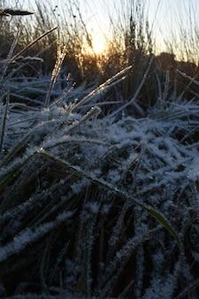 Neige fraîche sur l'herbe et l'aube