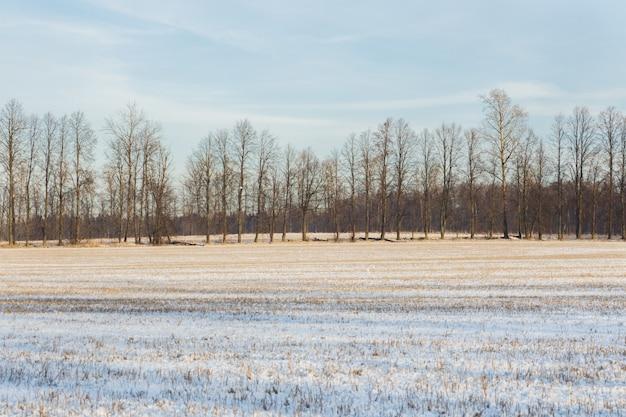 La neige fraîche repose sur l'herbe sèche à la forêt