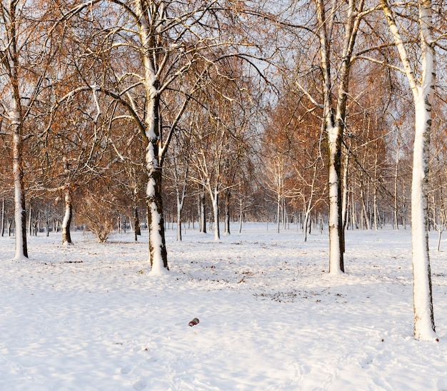 Neige photographiée en hiver, apparue après une chute de neige. fermer,