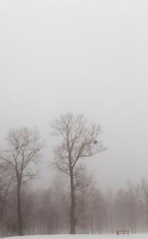 La Neige Profonde Dérive Après La Dernière Chute De Neige, Le Froid Hivernal Après La Chute De Neige, La Neige Dérive En Hiver Photo Premium