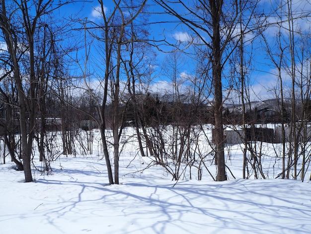La neige recouvre le sol au sol invisible. c'est l'hiver clair.