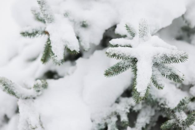 Neige se trouvant sur les branches vertes de l'épinette en gros plan d'hiver
