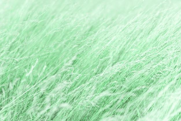 Neo fond de plante à la menthe. tendance de couleur