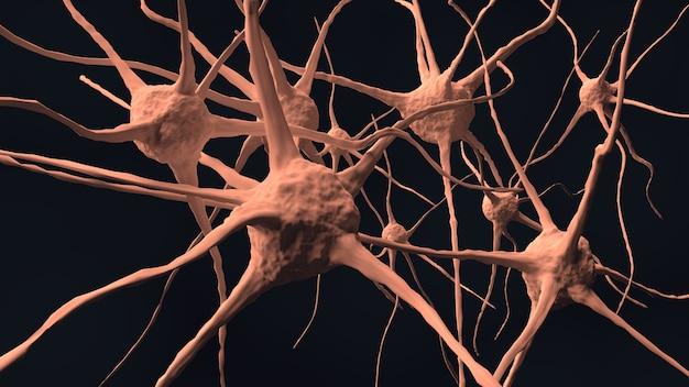 Nerf du cerveau humain dans le corps