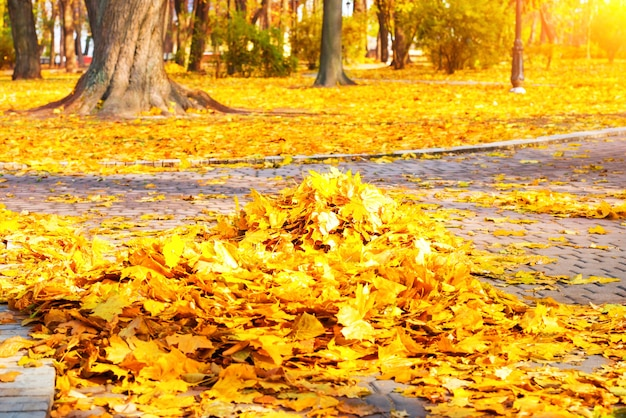 Nettoyage dans le parc - tas de feuilles jaunes d'automne sur le sol
