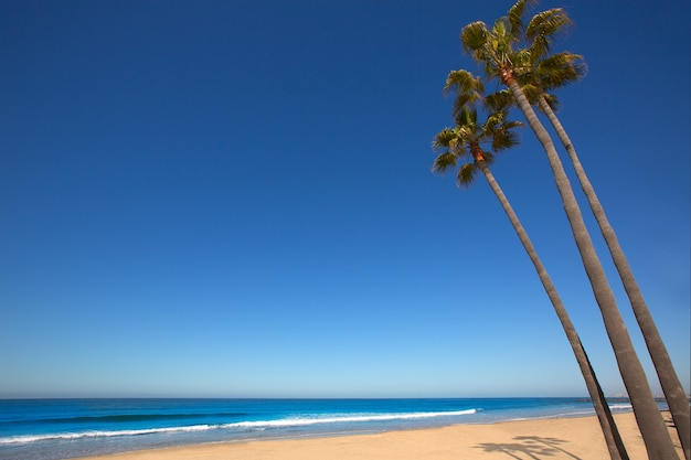 Newport beach, palmiers californiens, sur, rivage