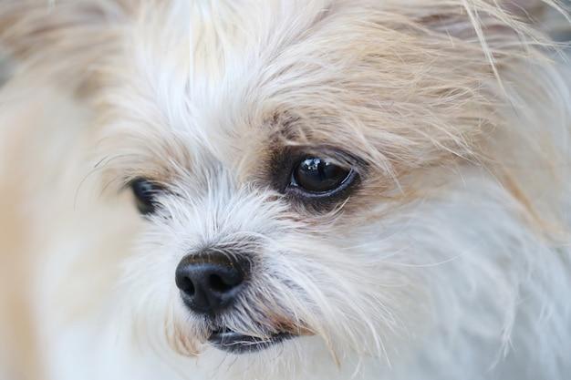 Nez de chien