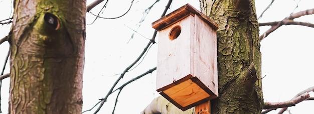 Nichoir sur l'arbre au début du printemps ou en automne oiseaux et nature