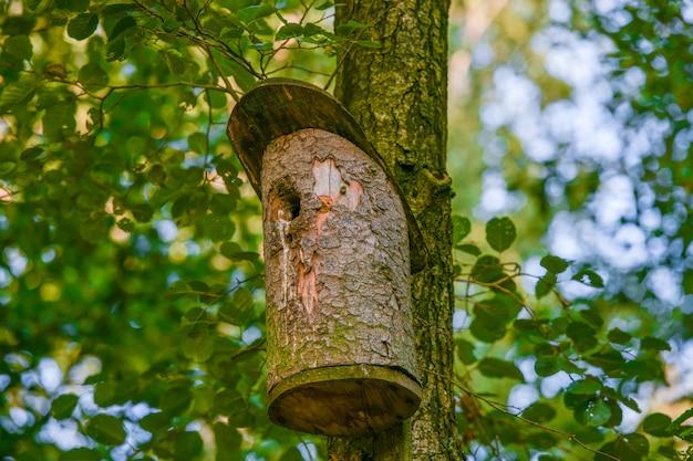 Nichoir en bois sur un arbre. nichoir en bois sur l'arbre, gros plan. nichoir en bois sur l'arbre dans un parc public