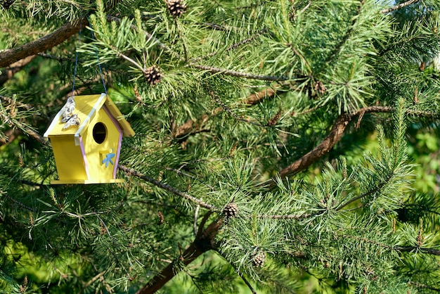 Un nichoir jaune est suspendu à un arbre épineux. maison d'oiseau ornemental. éclairage lumineux ensoleillé.