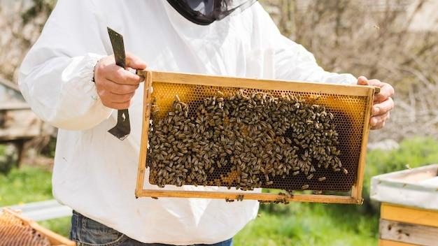 Nid d'abeille avec abeilles