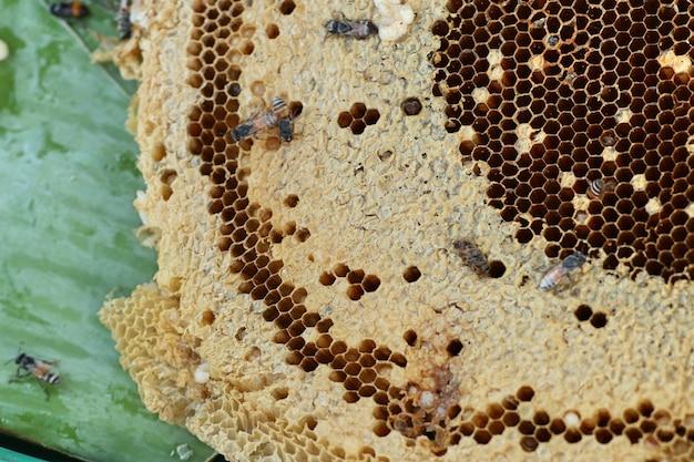 Nid d'abeille au street food