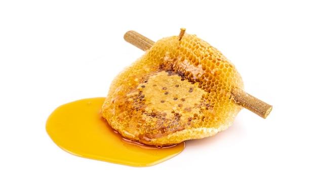 Nid d'abeille sur branche sèche isolé