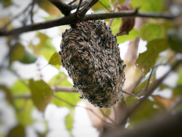 Nid d'abeille sur la branche.