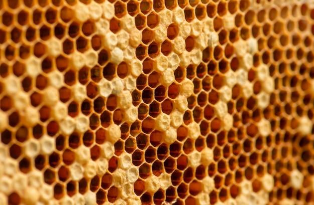 Nid d'abeilles, ruches, de la forêt tropicale naturelle de gunung kidul, yogyakarta, indonésie. fond naturel. mise au point sélectionnée.