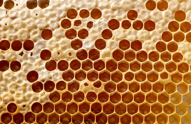 Nid d'abeilles, ruches, de la forêt tropicale naturelle de gunung kidul, yogyakarta, indonésie. fond naturel.