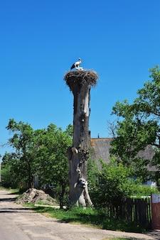 Le nid de cigogne en biélorussie