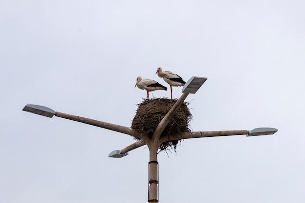 Nid de cigogne avec deux oiseaux