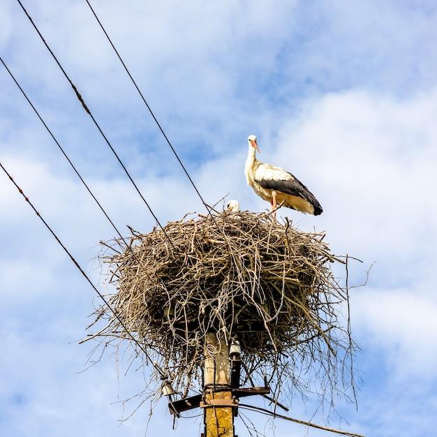 Nid de cigogne sur un poteau électrique sur le fond de ciel bleu