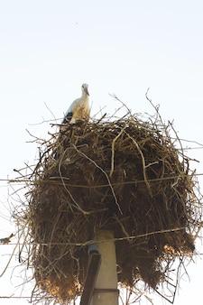 Un nid avec des cigognes sur un poteau d'une ligne électrique dans un village.