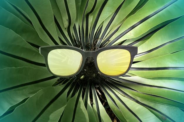 Nid fougère avec lunettes de soleil sur le fond.