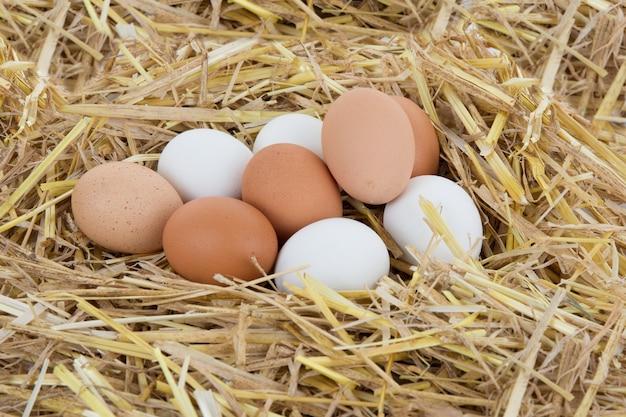 Nid d'oiseau avec trois œufs isolé sur blanc
