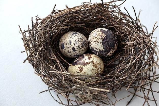 Nid d'oiseau avec trois petits œufs tachetés