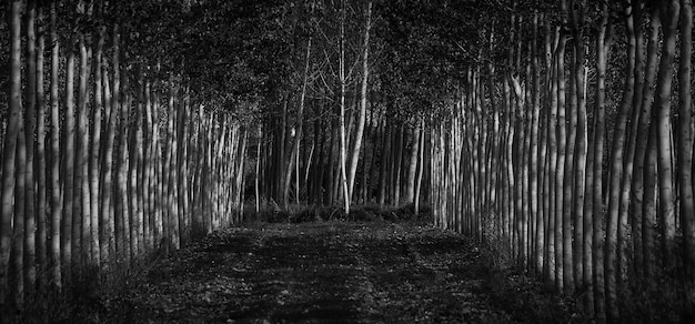 Niveaux de gris d'une forêt couverte d'arbres et de feuilles - idéal pour les concepts effrayants