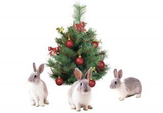 Noël lapins arbre