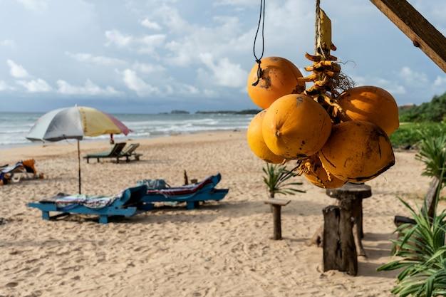 Noix de coco dorées sur le fond de la plage et de l'océan indien
