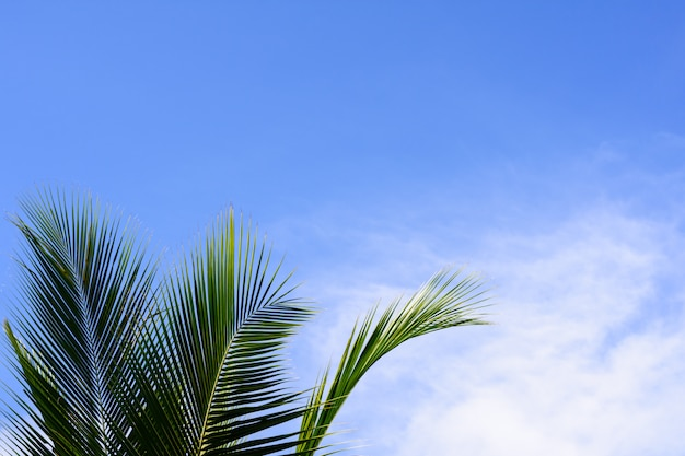 Noix de coco ou feuille de palmier sur fond de ciel bleu nuage. concept journée ensoleillée.