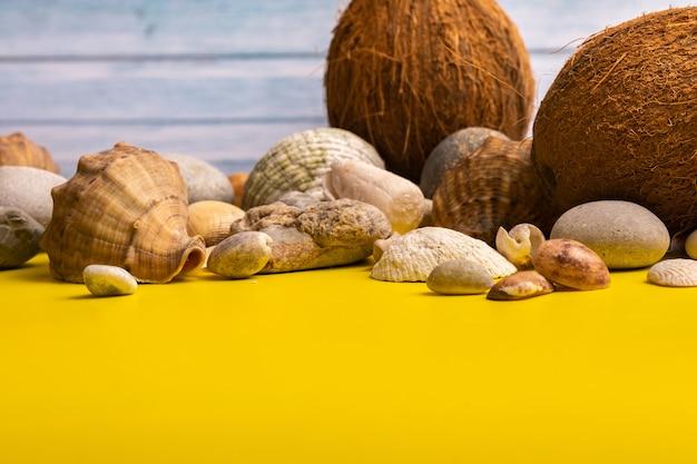 Noix de coco, roches et coquillages sur un fond en bois bleu et un fond jaune.thème marin