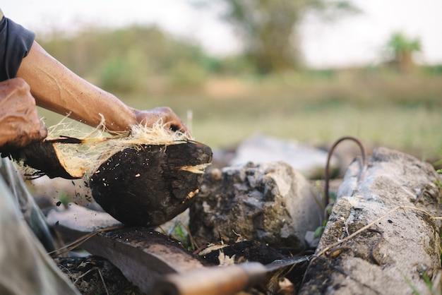 Noix de coco rôtie fraîche