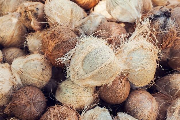 Noix de coco sèche brune sur le terrain